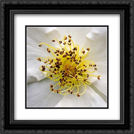 Rose Center 2x Matted 20x20 Black Ornate Framed Art Print by Amber Light Gallery (Amber Rose Gläser)
