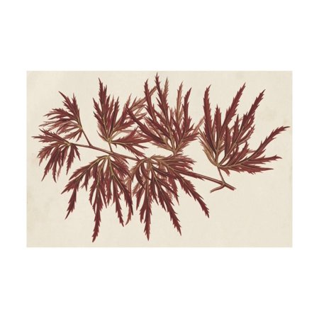 Japanese Maple Leaves IV Print Wall Art By Stroobant