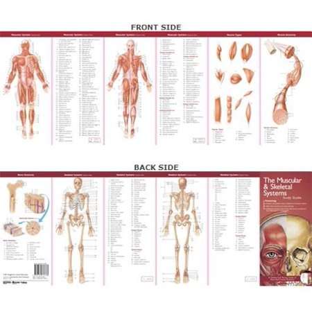 Anatomical Chart Company's Illustrated Pocket Anatomy: The Muscular & Skeletal Systems Study Guide (Anatomical Chart Series)