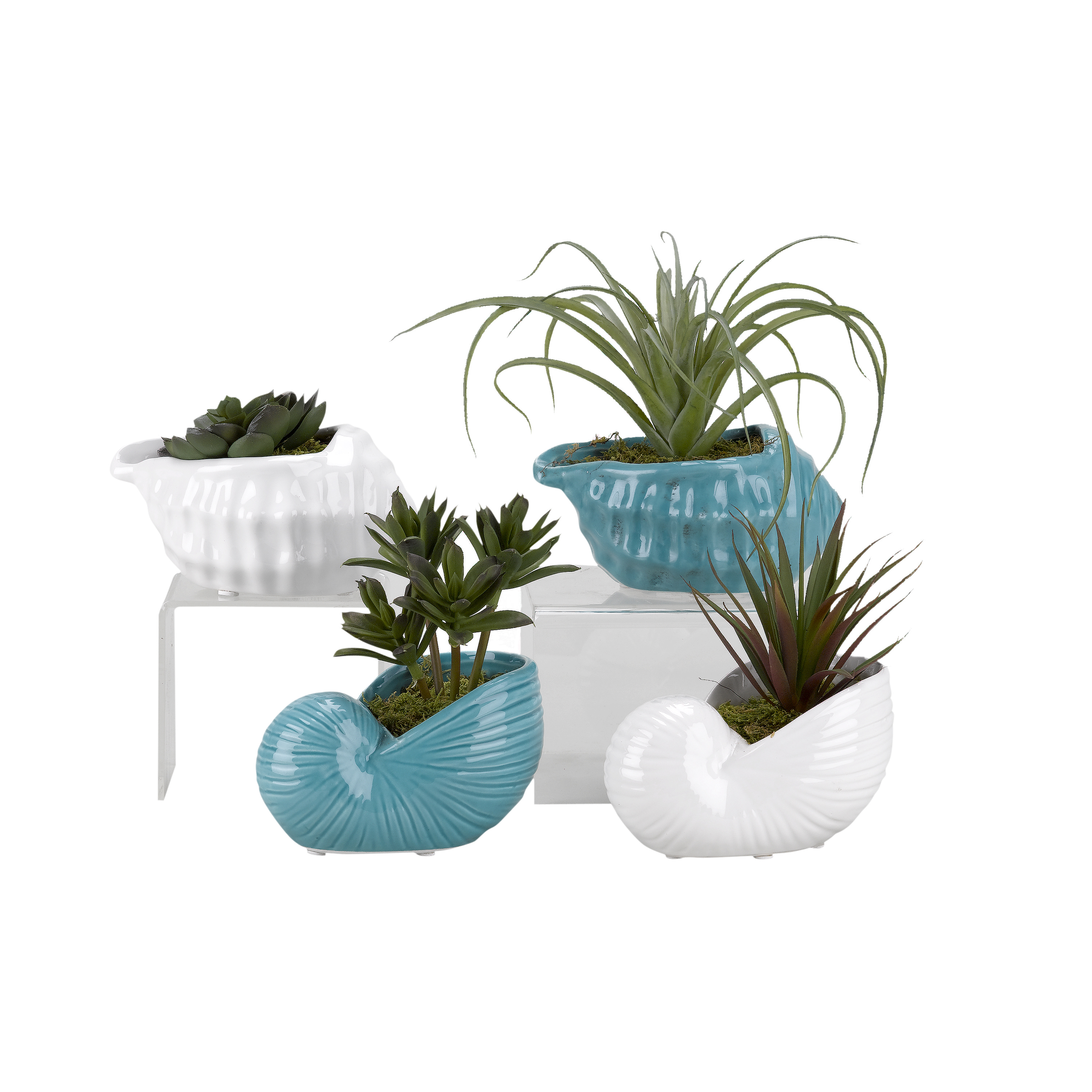 D&W Silks Mini Dracaena, Tilandsia, Succulent and Echeveria in Ceramic Shell Planters - Set of 4