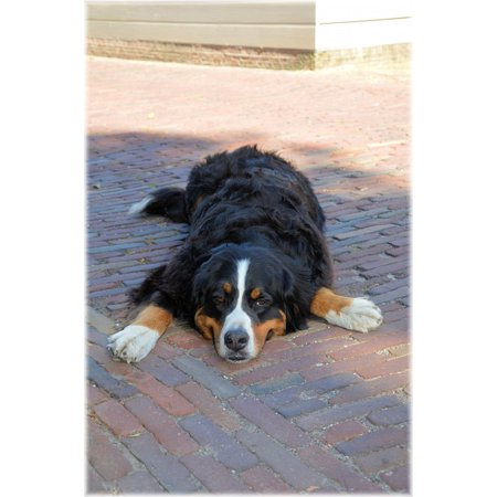 Canvas Print Puppy Pedigree Bernese Mountain Dog Canine Pet Dog Stretched Canvas 10 x