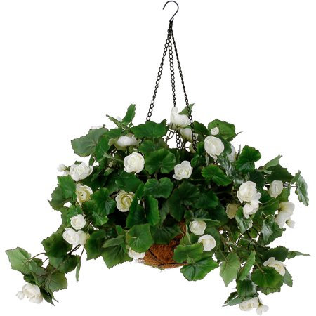 White Begonia Hanging Basket