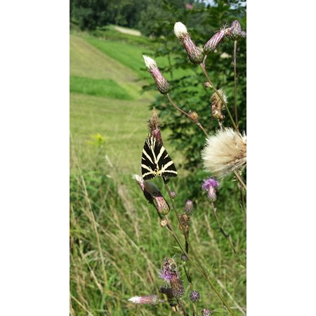 Laminated Poster Meadow Flower Butterfly Close Nature Poster Print 24 x 36