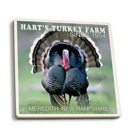 Meredith, New Hampshire - Wild Turkey - Lantern Press Photography (James T. Jones) (Set of 4 Ceramic Coasters - Cork-backed, Absorbent)](Turkish Lanterns)