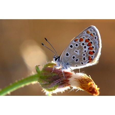 - Canvas Print Brown Butterflies Ankara Very Eyes Turkey Stretched Canvas 10 x 14