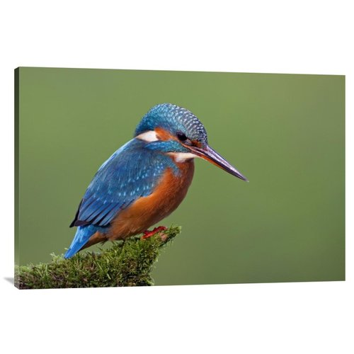 East Urban Home 'Common Kingfisher' Photographic Print on Canvas