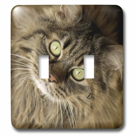 3dRose Maine coon cat, Santa Fe, New Mexico - US32 JMR0448 - Julien McRoberts - Double Toggle Switch (Outlet Stores Santa Fe)