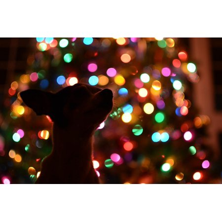 laminated poster lights dog christmas tree colorful dark silhouette poster 24x16 adhesive decal