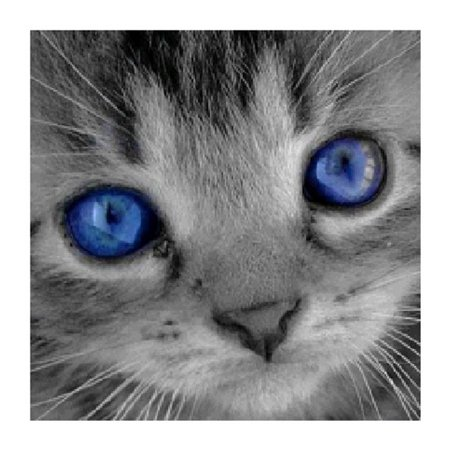 Fancyleo New Sapphire Blue Eyes Cat Diamond Painting Blue Eyed White Cats