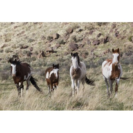 Wild Horses, Family Group Print Wall Art By Ken Archer