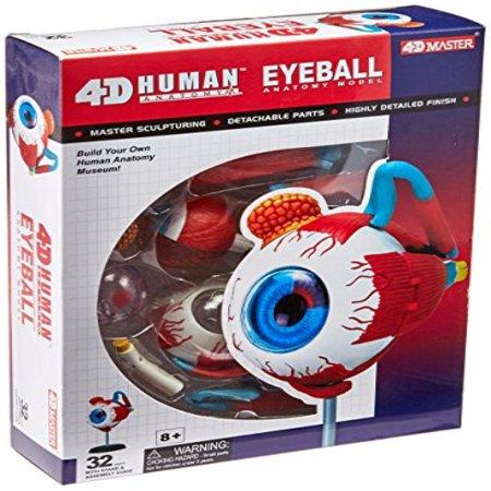 Tedco Human Anatomy - Eyeball Anatomy Model - Anatomy Games