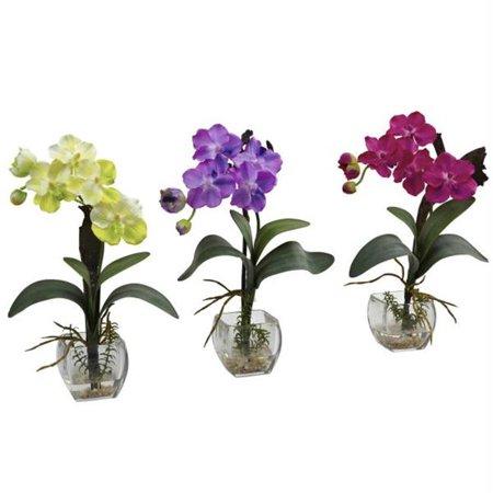 Mini Vanda Orchid Arrangement - Set of 3 - Mini Vanda Orchid