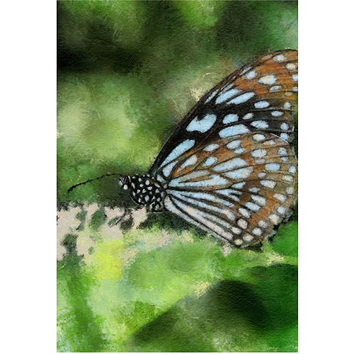 "Trademark Fine Art ""Butterfly in Blue"" Canvas Wall Art by Lois Bryan"