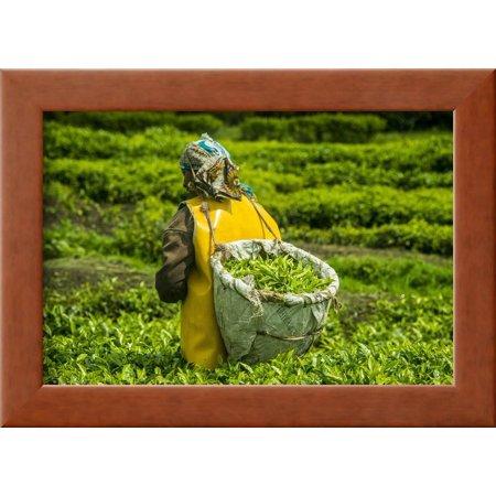 Tea Plantation in the Virunga Mountains, Rwanda, Africa Framed Print Wall  Art By Michael