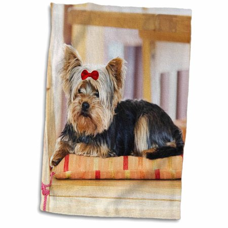 3dRose Yorkie. Yorkshire Terrier. Cute puppy with red bow. Playful dog. - Towel, 15 by 22-inch