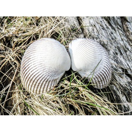Canvas Print Angel Wings Tropical Nature Shells Natural Sea Stretched Canvas 10 x 14 (Tropical Natural Shell)