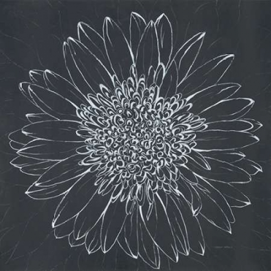 Chalk Bloom 2 Rolled Canvas Art - Connor Adams (12 x 12)