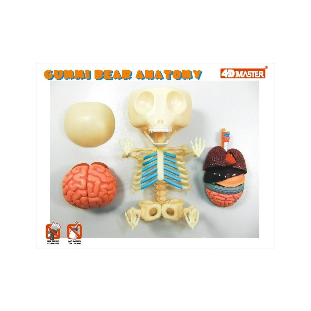 4D Vision Gummi Bear Anatomy Model - Walmart.com