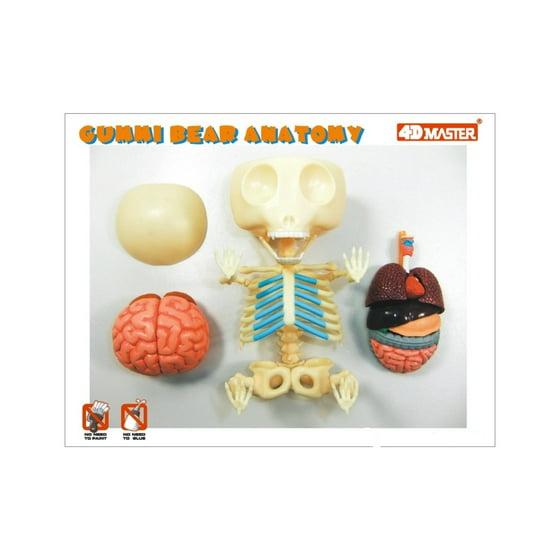 4d Vision Gummi Bear Anatomy Model Walmart