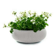 Keter Knit Cozie 21.3 in. dia. Large Resin Planter, Oasis White