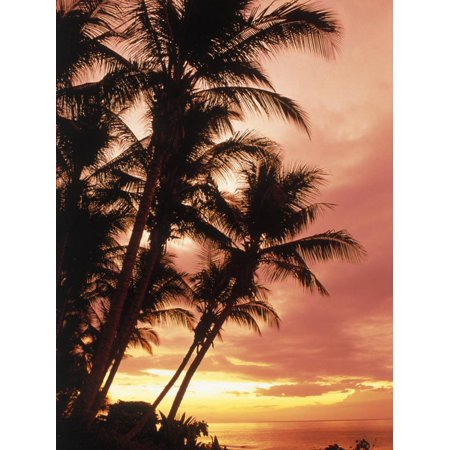 Silhouetted Palm Trees, Costa Rica Print Wall Art By Robert Houser