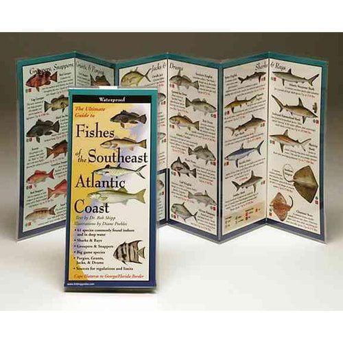 Fishes of the Southeast Atlantic Coast