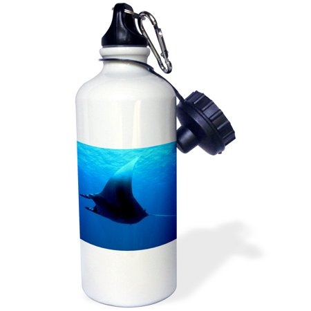 3dRose Marine life, Manta ray at Rocky Island, Red Sea, Egypt-AF14 AKA0006 - Ali Kabas, Sports Water Bottle, 21oz