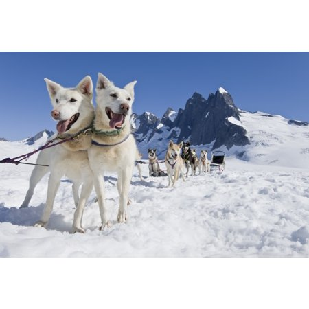 Icy Tower (Sled Dog Team Standing On The Juneau Ice FieldNthe Granite Spires Of Mendenhall Towers Can Been Seen In The Distance Summer In Southeast Alaska Digitally Altered Canvas Art - John)