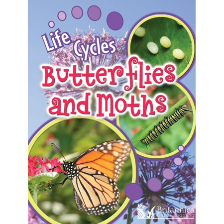 Butterflies and Moths - eBook Insect Life Cycles