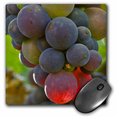 3Drose Pinot Noir In Bayless Vineyard  Lafayette  Oregon   Us38 Jmi0908   Janis Miglavs  Mouse Pad  8 By 8 Inches