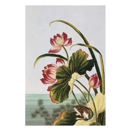Water Wall Collection (18th Century French Print of Red Water Lily of China Print Wall Art By Stapleton)