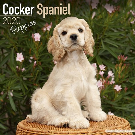 Cocker Spaniels 2010 Calendar (Cocker Spaniel Puppies Calendar 2020 - Cocker Spaniel Puppies Dog Breed Calendar - Cocker Spaniel Puppiess Premium Wall Calendar 2020 )