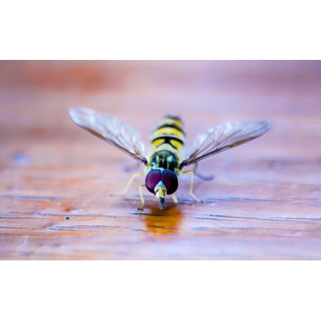 LAMINATED POSTER Animal Summer Nature Insect Hoverfly Close Macro Poster Print 24 x 36
