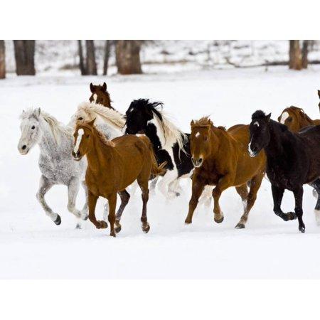 Running Horses on Hideout Ranch, Shell, Wyoming, USA Print Wall Art By Joe Restuccia III (Running Y Ranch Halloween)