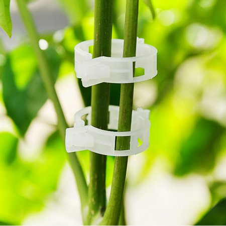 Garden Plant Support Clips Trellis for Vine Vegetable Tomato to Grow