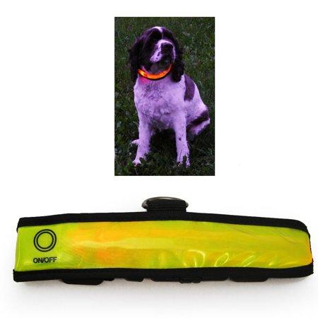 Bright Led Flashing Safety Collars (LED Light Up Dog Pet Night Safety Collar Bright Flashing Adjustable Small)