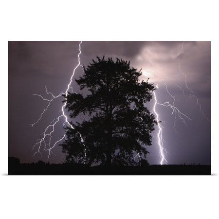 Great Big Canvas Richard Wear Poster Print Entitled Lightning Strikes In The Sky Behind A Tree  Alberta  Canada