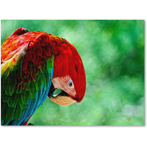 "Trademark Fine Art ""Colorful Macaw"" Canvas Art by Lois Bryan"