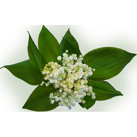 Canvas Print Lily of The Valley Flower Signs of Spring Bouquet Stretched Canvas 10 x