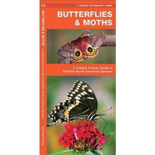 Butterflies & Moths: A Folding Pocket Guide to Familiar North American Species