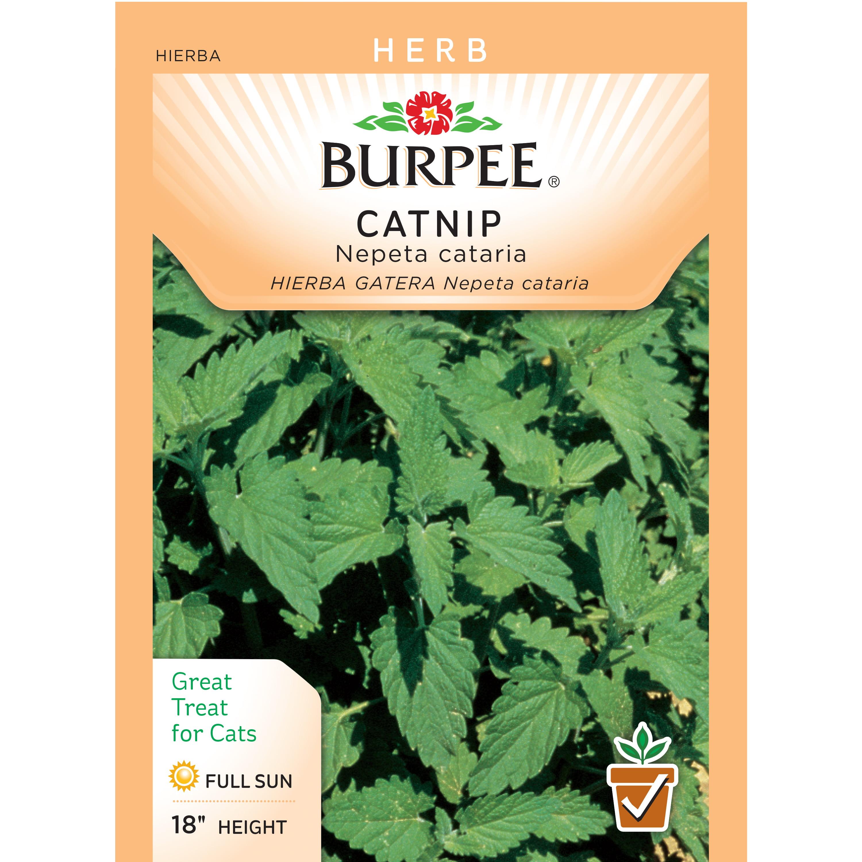 Burpee Catnip Seed Packet Walmart