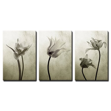 3 Arm Tulip - wall26 - 3 Piece Canvas Wall Art - Abstract Transparent Tulips in Back Light - Modern Home Decor Stretched and Framed Ready to Hang - 16