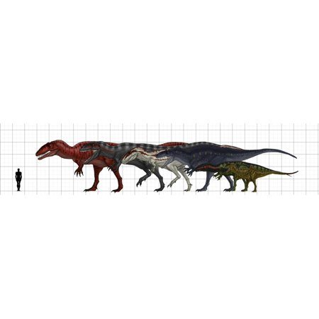 Carcharodontosauridae size chart featuring Carcharodontosaurus Giganotosaurus Mapusaurus Acrocanthosaurus Eocarcharia and Concavenator Poster Print - Pet Size Chart