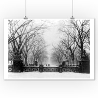 Trees in Central Park New York City - Vintage Photograph (9x12 Art Print, Wall Decor Travel Poster)