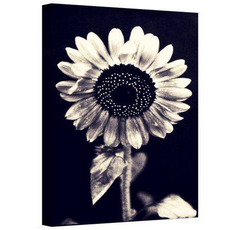 Artwall Elena Ray Black And White Sunflower Gallery Wrapped Canvas