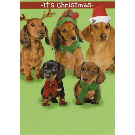 Recycled Paper Greetings Dach the Halls Funny / Humorous Christmas Card