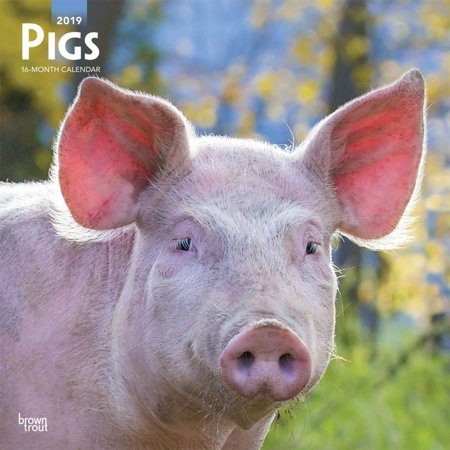 - 2019 Pigs Wall Calendar,  by BrownTrout