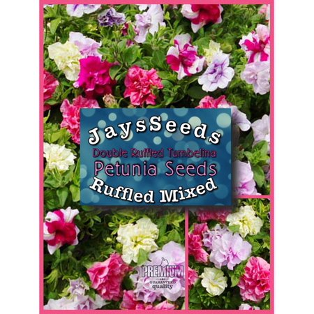 Double Ruffled Mixed Petunia Seed Packet & Free Mixed Carnation Seeds Free Flower Seeds