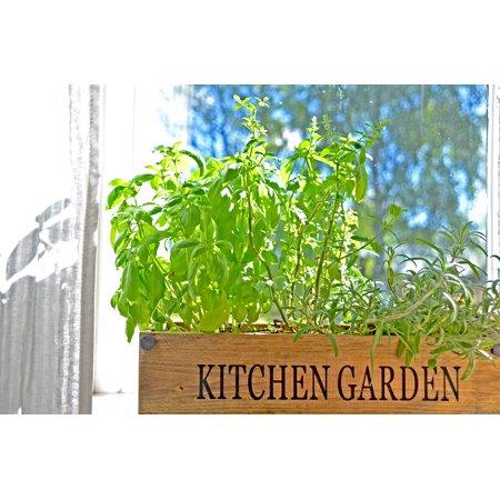 Canvas Print Spices Green Window Garden Sweden Summer Cottage Stretched Canvas 10 x 14