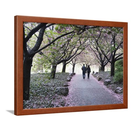 Spring Cherry Blossom, Brooklyn Botanical Garden, Brooklyn Framed Print Wall Art By Christian Kober (Botanical Gardens Brooklyn Halloween)